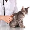 Ветеринарные клиники в Акутихе
